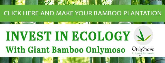 Invest in ecology with Onlymoso bamboo